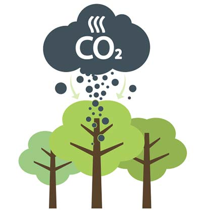 northern hardwoods forests grow capture and convert CO2