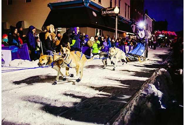 copper dog races