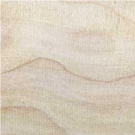 Northern hardwoods yellow birch