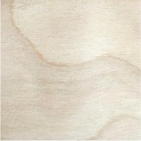 Northern hardwoods white birch